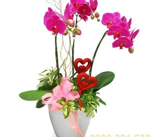Gửi hoa giả đi Úc ngày tết, trao trọn niềm yêu thương